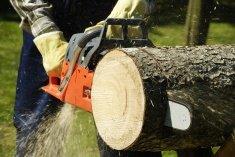 עיצוב גינון - לכרות עצים בלי לפגוע בטבע